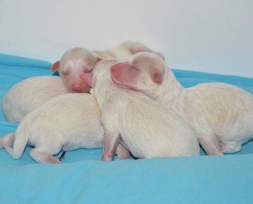 Nutrição dos cãezinhos recém-nascidos